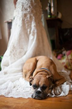 yes-i-do-wedding-pets2