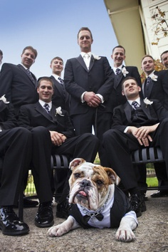 yes-i-do-wedding-pets4