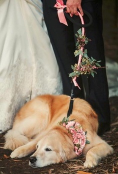 yes-i-do-wedding-pets5